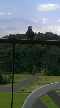 Bunya Mountains Accommodation: view of the delightful wildlife from our balcony.