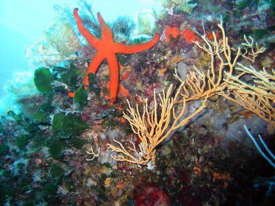 Areamare Diving Center: Fondali di Caprera