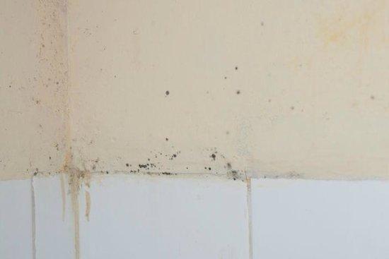 Kandyan Reach Hotel: Schimmel in der Dusche