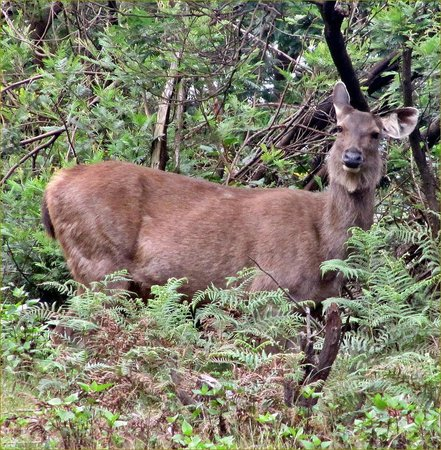 Upper Bhavani Lake: Deer lurking in the undergrowth!