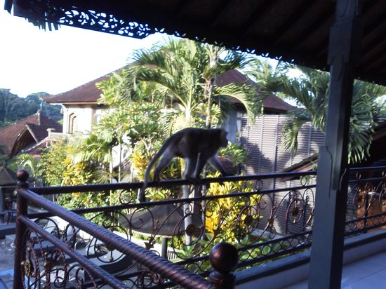 Pande Permai Bungalows: monky