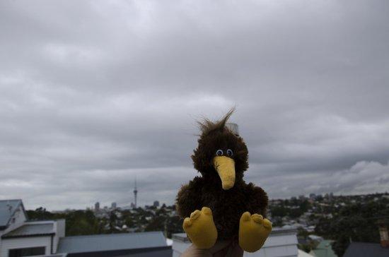 Sunderland House: Detalle de vistas desde la habitación con peluche kiwi
