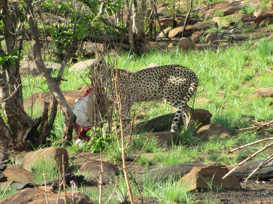 Fifty Seven Waterberg: Game Drive