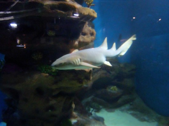 Shark Picture Of Greater Cleveland Aquarium Cleveland