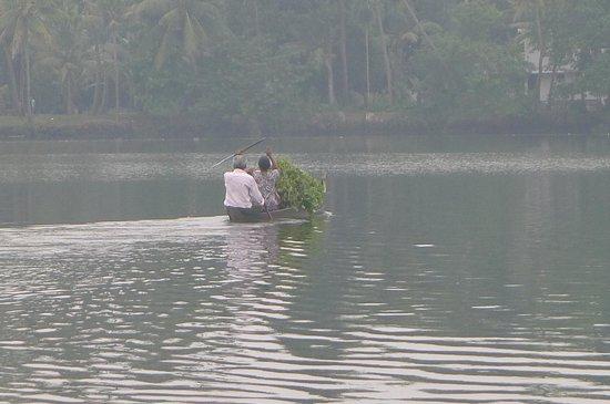 Big Banana Island Retreat: la vie paisible de la rivière
