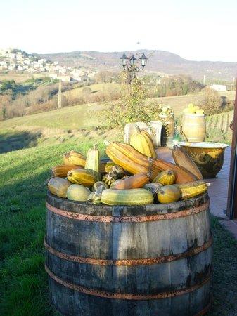 Agriturismo Gattogiallo: Panorama fuori dall'agriturismo
