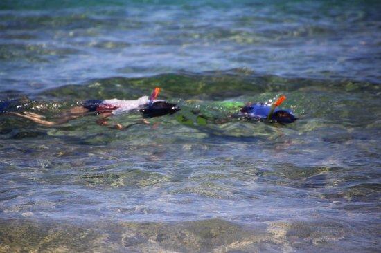 Porta del Mar Beach Hotel: snorkling