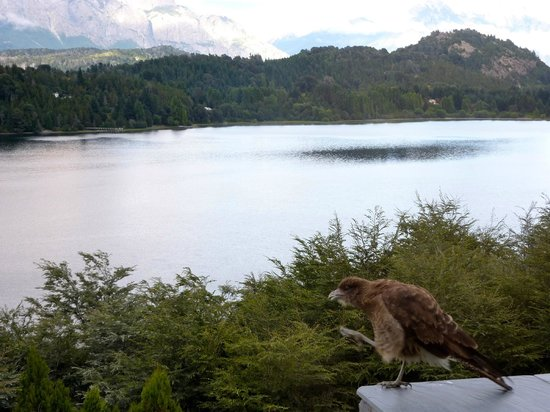 Aldebaran Hotel & Spa: View from our balcony with our little hawk friend