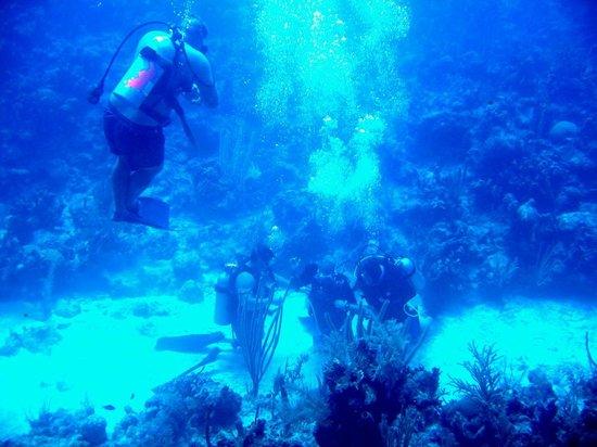 Cayman Marine Lab : Cert dive for Wayne w/Brian