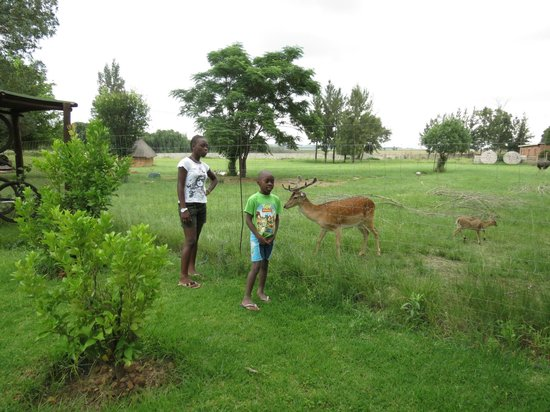 Airport Game Lodge: another animal view
