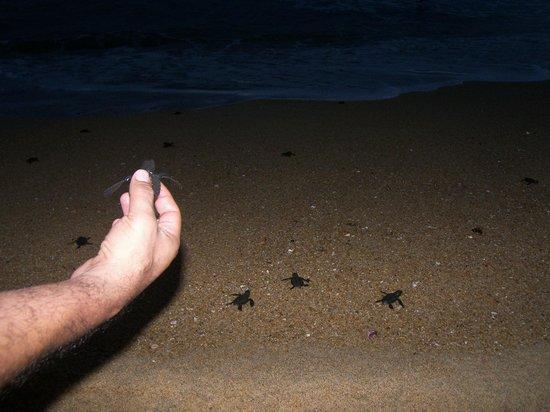 Meson Casa de Piedra: Liberación de tortugas