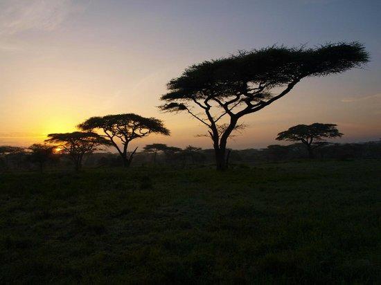 Ndutu Wildlands Camp: alba a Ndutu