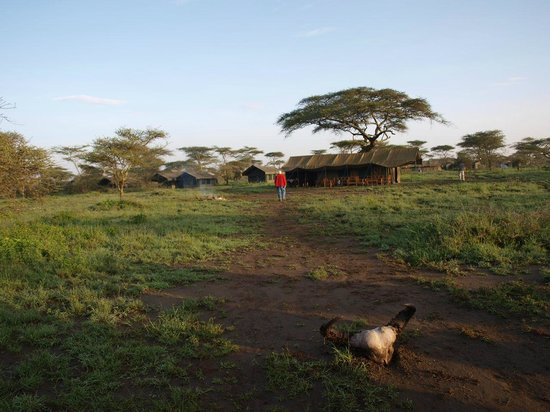 Ndutu Wildlands Camp : ingresso campo