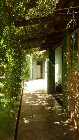Green House Hostel: the way from garden and kitchen