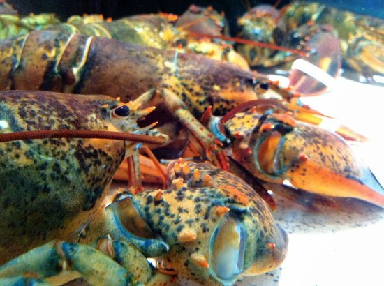 Red Lobster: Fresh Lobster Selection