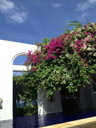 Hotel Casa Harb: The terrasse 