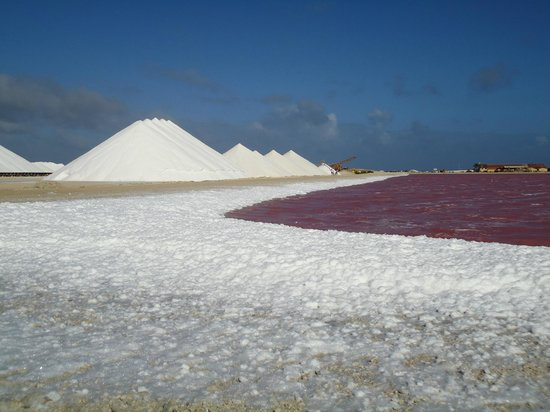 Кралендейк, Бонэйр: Bonaire, Salt flats with lots of foam, See the pink colour of the water