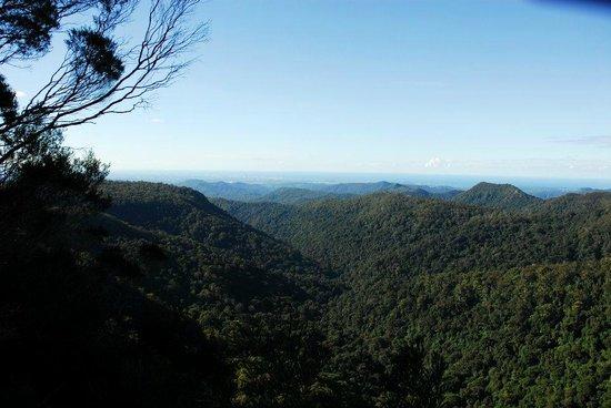Bushwacker Ecotours: Atop A Mountain