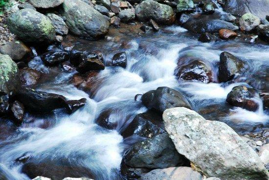 Bushwacker Ecotours: Snowy streams