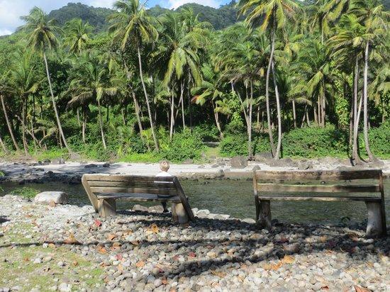 Rosalie Bay Resort: Overlooking the river