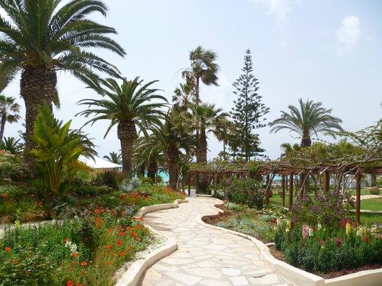 Nissi Beach Resort: wunderschöne Gartenanlage