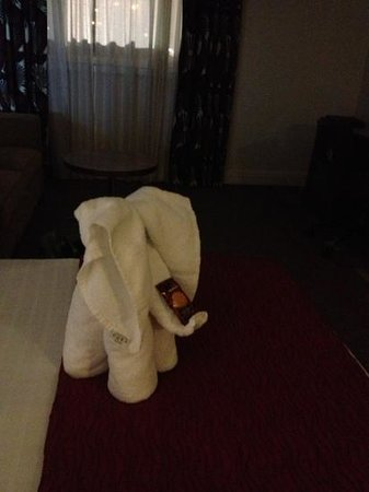 Hilton Dartford Bridge: nice towel elephant with its shortbread biscuit offering!