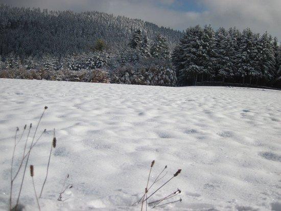 Appartementhaus Schwarzwaldblick: Winterspaziergang