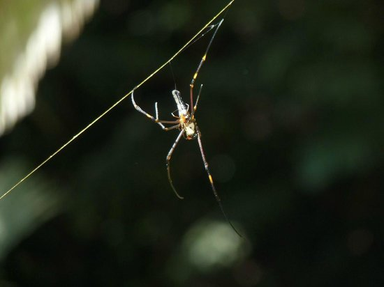 Khao Phra Thaeo National Park : Spider