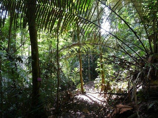 Khao Phra Thaeo National Park: Jungle