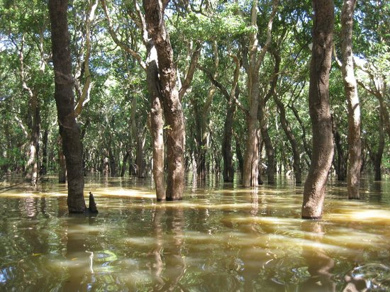 Angkor Holidays Tour: The flooded forest