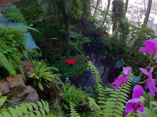 Ambassador Transit Hotel Terminal 3: Butterfly Garden