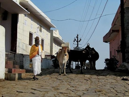Surya Mandir: At a corner in the walk we meet with local cattle