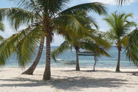 Ocean Blue & Sand: Ile de Saona
