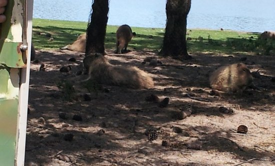 Mundo Marino: safari terrestre. algunos animales