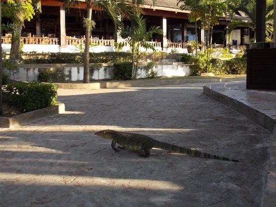 Perhentian Island Resort: hotel