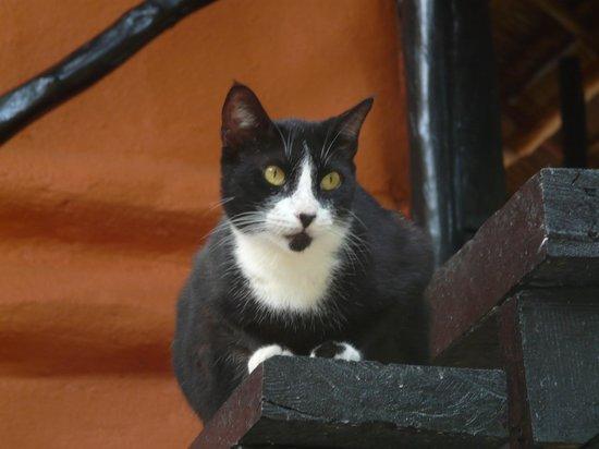 Las Palmas Maya: resident cat