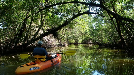 Tranquilo Bay Eco Adventure Lodge: Kayaking through the Mangroves