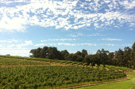 Vasse Felix - worth a trip