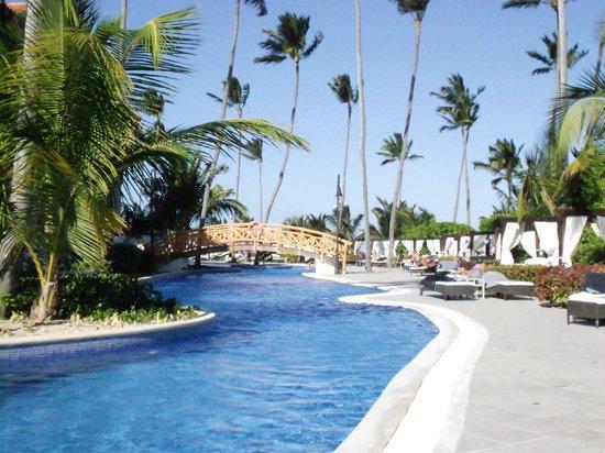 bali beds pool area picture of majestic elegance punta. Black Bedroom Furniture Sets. Home Design Ideas