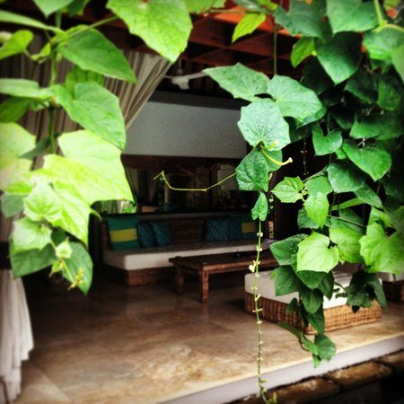 The One Villa: Looking through the beautiful ivy