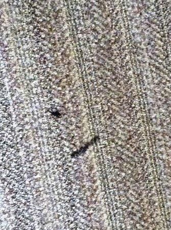 DoubleTree by Hilton Hotel St. Louis - Westport : carpet stains