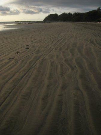 Nosara Paradise Rentals: Nosara beach