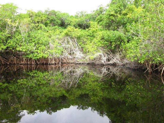 Anwar Tours: Northern river