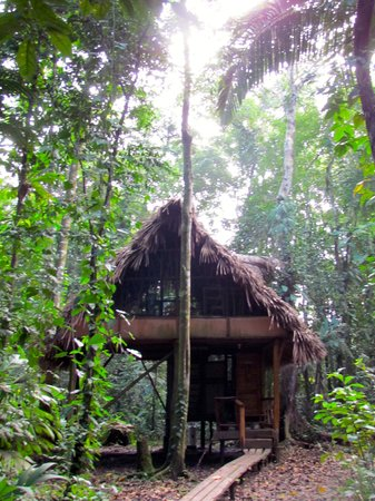Cotton Tree Lodge: Jungle Caban