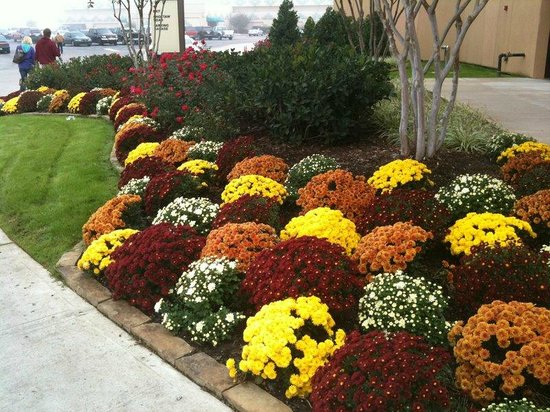 Choctaw Casino Resort: Beautiful Fall Flowers