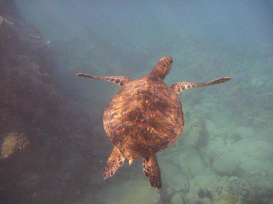 Maluaka Beach: Honu 2