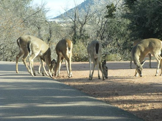 Quartz Mountain Nature Park: A bunch of deer. Very occupied with their food