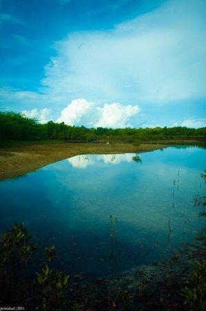 The Tamarind Tree Resort: Photo