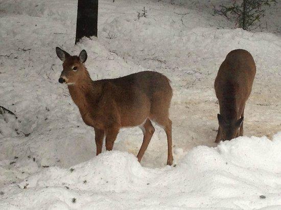 La Tremblante: Deers