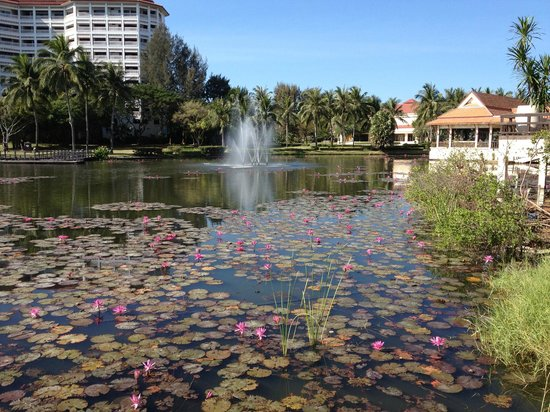 Dusit Thani Hua Hin: Lotus pool
